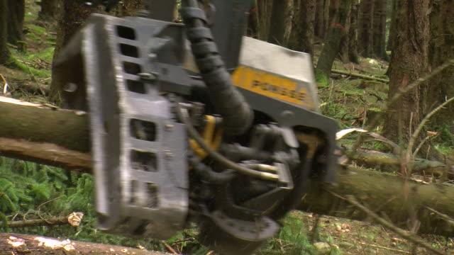 vidéos et rushes de  ms harvester at work in forest / zerf, rhineland palatinate, germany - image animée