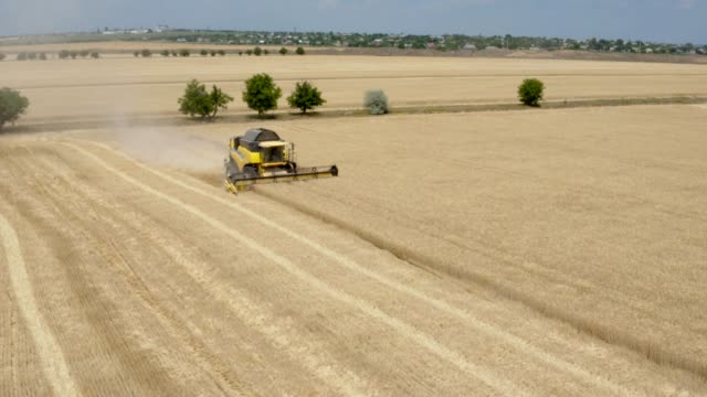 harvester harvests wheat on field - aerial view - agricultural machinery stock videos & royalty-free footage