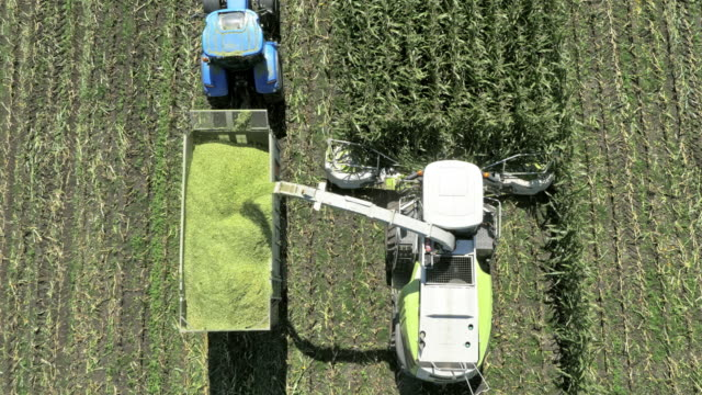 AERIAL Harvester reaping corn on a sunny day in field