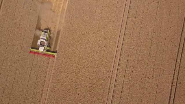 Harvester with grain harvest from above, Germany
