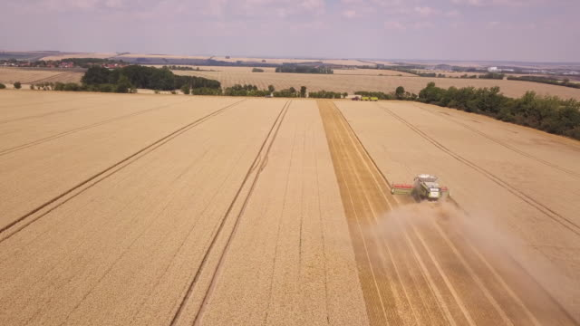 harvester with grain harvest from above, germany - turingia video stock e b–roll