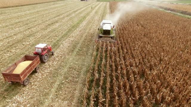 Harvester Champ de maïs travail