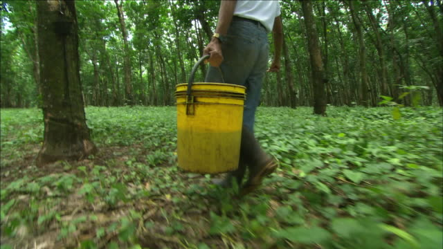 harvesters carry buckets of rubber tree latex through a plantation. - latex stock videos & royalty-free footage