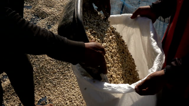 harvesting coffee bean slow motion - roasted coffee bean stock videos & royalty-free footage