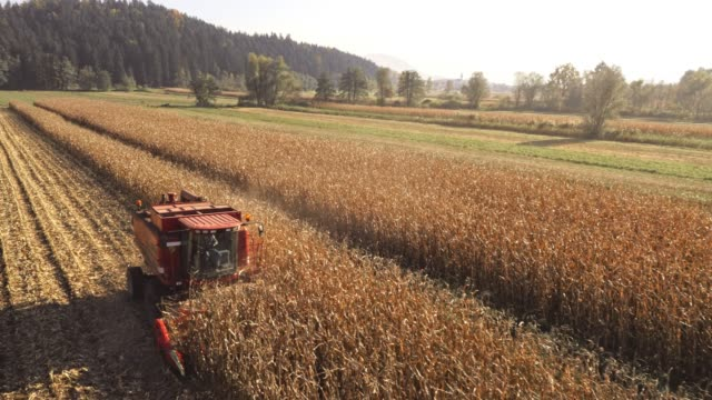 vídeos y material grabado en eventos de stock de la recolección aérea de maíz en sol - actividad de agricultura