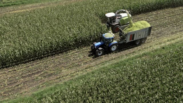 aerial harvesting corn on a field in sunshine - agricultural machinery stock videos & royalty-free footage