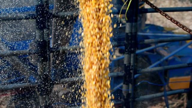 vídeos de stock, filmes e b-roll de colheita de milho - soja
