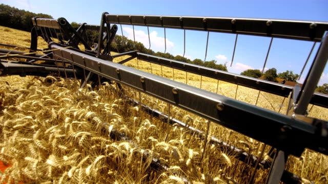 La raccolta cereali colture