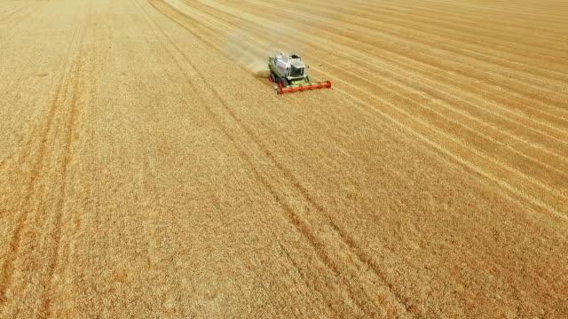 vidéos et rushes de récolte dans le champ de blé d'été - récolter