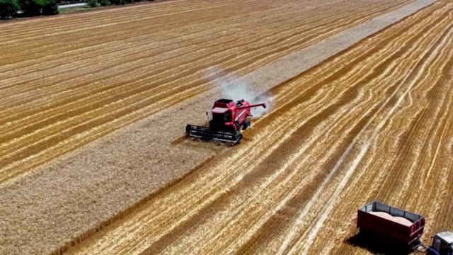 harvesting in summer wheat field - agricultural equipment stock videos and b-roll footage