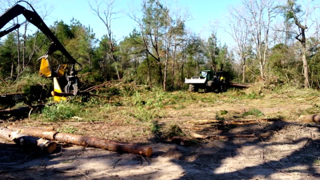 Harvesting, logging timber in forest in East Texas.
