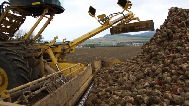a harvesting machine unloads sugar beets into a truck following harvest at a farm in bodenburg germany on wednesday oct 25 photographer dario... - beet stock videos & royalty-free footage