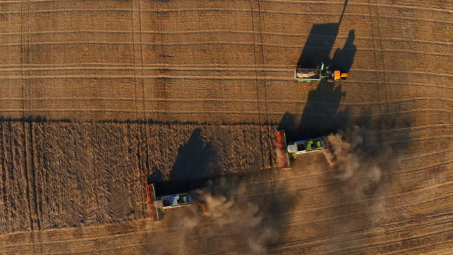 harvesting on grainfield from above, germany - turingia video stock e b–roll