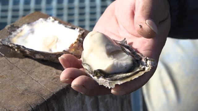 harvesting oysters in hiroshima - satoyama scenery stock videos & royalty-free footage