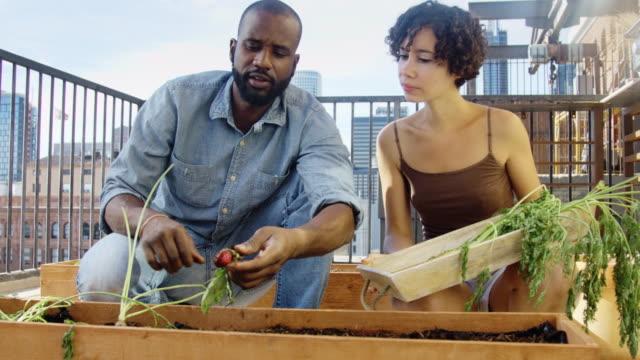 Harvesting Root Vegetables from Balcony Garden