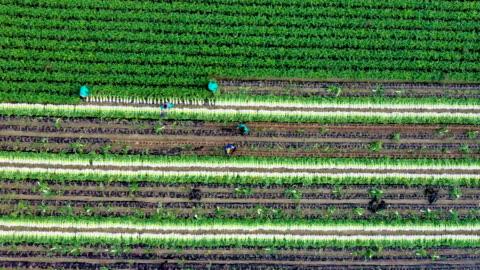 vídeos y material grabado en eventos de stock de harvesting scenery of radish field / hongcheon-gun, gangwon-do, south korea - campo arado