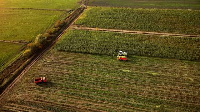 harvesting season. combine harvesting corn in the field - russia stock videos & royalty-free footage
