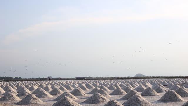 harvesting season of salt farming in thailand - 1993 stock videos & royalty-free footage