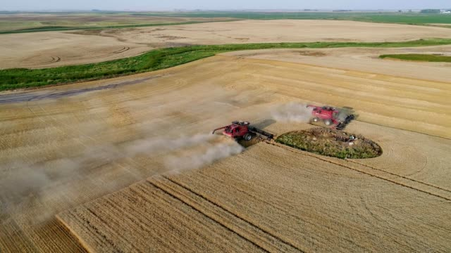 vidéos et rushes de harvesting small grains on the prairie of north dakota - grandes plaines américaines