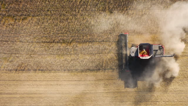 harvesting soybeans 4k - soybean stock videos and b-roll footage