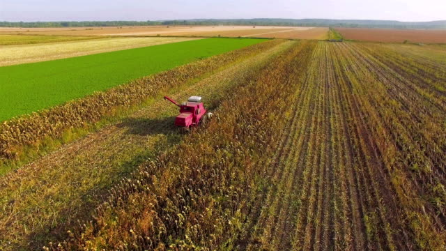 harvesting sunflower with modern combine harvester - common sunflower stock videos & royalty-free footage