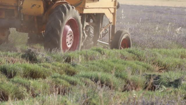vídeos de stock e filmes b-roll de harvesting the lavender fields in guadalajara, heavy machinery - spain - cena não urbana
