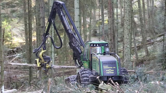 harvesting timber for biofuel using a forwarder in grizedale forest, cumbria, uk - evergreen stock videos & royalty-free footage