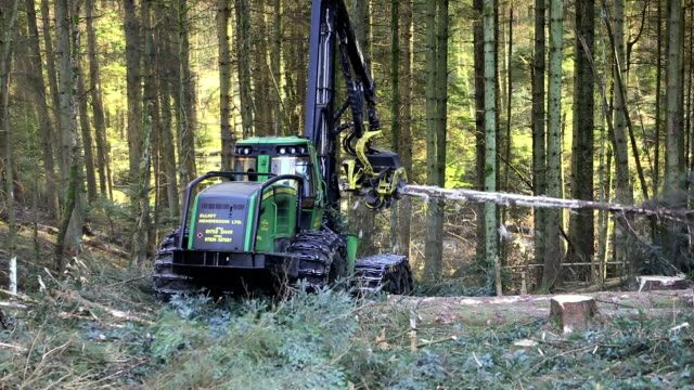harvesting timber - timber stock videos and b-roll footage