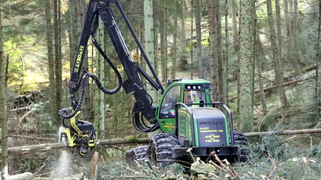 harvesting timber - cutting stock videos & royalty-free footage