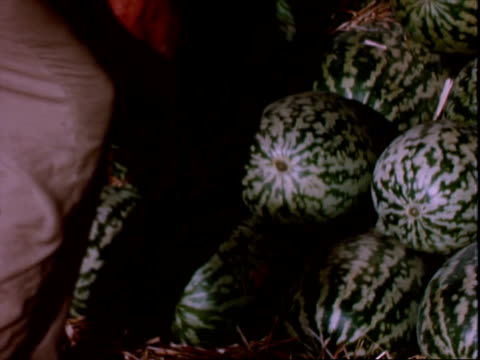 harvesting watermelons - migrant worker stock videos and b-roll footage