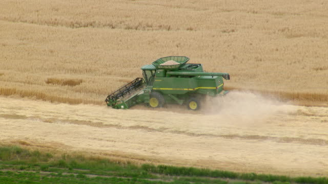 vidéos et rushes de ms ts ha pov harvesting wheat by combine harvester in wheat field / oregon, united states - tracteur