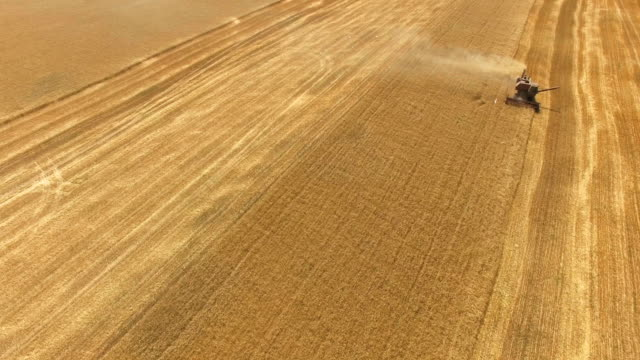 aerial: harvesting wheat - yellow stock videos & royalty-free footage