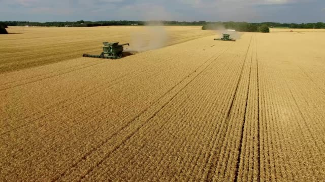 harvesting wheat - midwest usa stock videos & royalty-free footage