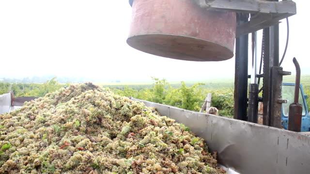 vídeos de stock e filmes b-roll de colhendo uvas para vinho - camião