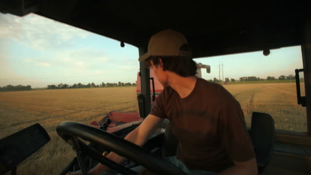 harvesting winter wheat - combine harvester stock videos & royalty-free footage