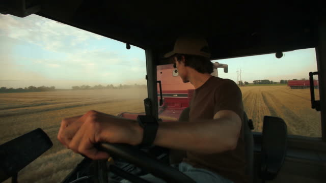 harvesting winter wheat - tractor stock videos & royalty-free footage