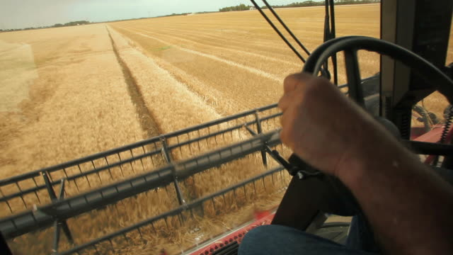 harvesting winter wheat - agricultural equipment stock videos and b-roll footage