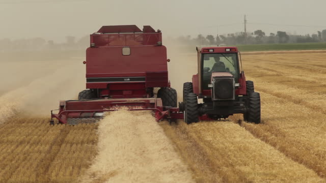 harvesting winter wheat - effort stock videos & royalty-free footage