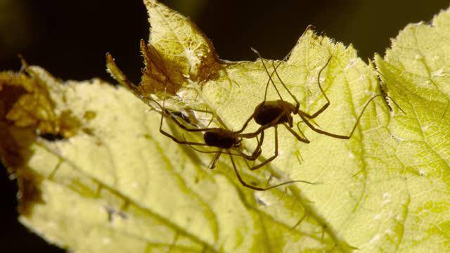 harvestmen crawl over leaves, alaska. - chugach national forest stock videos & royalty-free footage