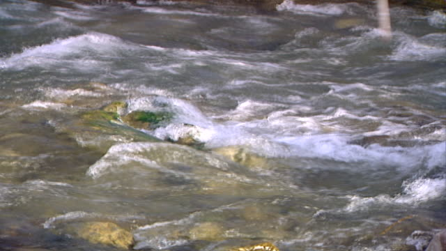 hasbani river. mcu view of rapids in the swift flowing river. the hasbani runs for 25 miles in lebanon before crossing into israel. - tree trunk stock videos & royalty-free footage