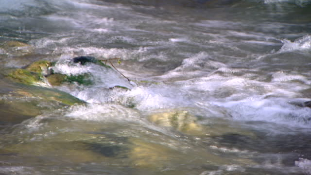 hasbani river. view of rapids in the swift flowing river. the hasbani runs for 25 miles in lebanon before crossing into israel. - tree trunk stock videos & royalty-free footage