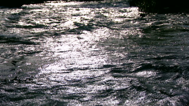 hasbani river. view of sunlight reflecting off the swift current of the river. the hasbani forms the border between lebanon and the golan heights. - tree trunk stock videos & royalty-free footage