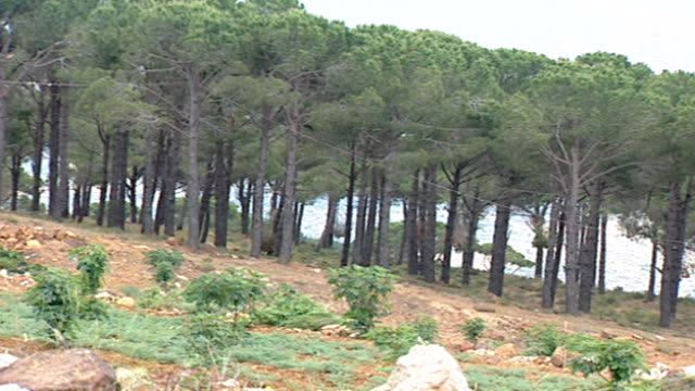 hasbaya, lebanon. pan-right of a pine forest in hasbaya, capital of wadi al taym, a valley in southern lebanon which is mainly inhabited by druze. - pinaceae stock videos & royalty-free footage