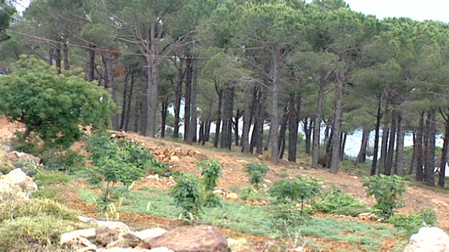 hasbaya lebanon wideshot of a pine forest in hasbaya the capital of wadi al taym a valley in southern lebanon which is mainly inhabited by druze - pinacee video stock e b–roll