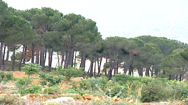 vídeos de stock e filmes b-roll de hasbaya, lebanon. wide-shot of a pine forest in hasbaya, the capital of wadi al taym, a valley in south lebanon which is mainly inhabited by druze. - pinaceae