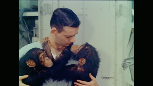 a hatch lifts inside a laboratory and two baby chimpanzees run into the arms of a male scientist who welcomes them affectionately - weltraum mission stock-videos und b-roll-filmmaterial