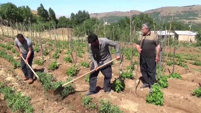 haunted by the pkk terrorists nearly three decades ago a village in eastern turkey has now turned into a peaceful abode due to frequent terrorist... - four animals stock videos & royalty-free footage