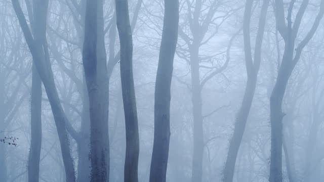haunted woods with mysterious spooky scary bare trees and woodlands in dark blue forest landscape scenery with thick fog and mist in beautiful atmospheric foggy misty weather conditions, england, uk - bare tree stock videos & royalty-free footage