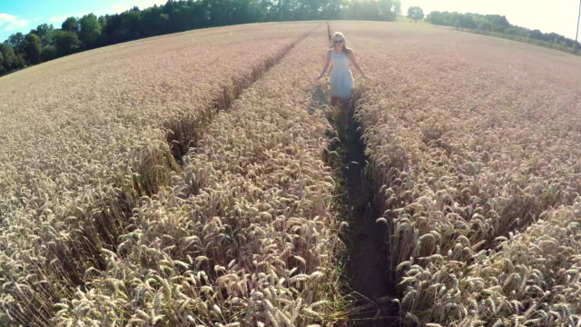 Having Fun In A Wheat Field - Stock Video