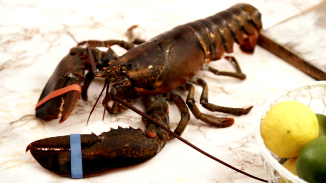 having fun in preparing fresh healthy lobster - lobster seafood stock videos and b-roll footage